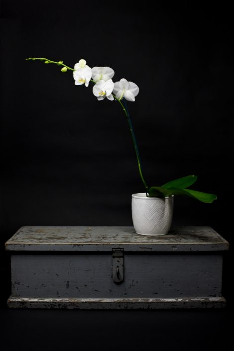 Phalaenopsis orchid in a ceramic pot